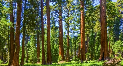 California Sequoia National Park
